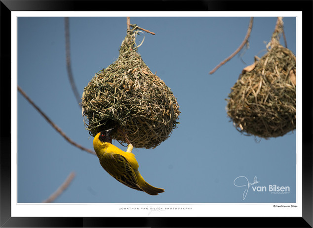 Birds_of_Namibia_-_020_-_©_Jonathan_van