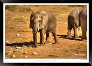 Elephants_of_Etosha_-_013_-_©_Jonathan_v