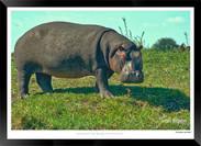Images of East Africa - 001 - © Jonathan van Bilsen.jpg