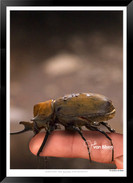 Images_of_Costa_Rica_-_003_-_©_Jonathan_