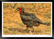 Images of East Africa - 011 - © Jonathan van Bilsen.jpg
