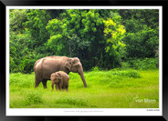 Elephants of Sri Lanka -  009 - ©Jonathan van Bilsen.jpg