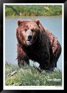 Beasts_of_Canada_-_008_-_©_Jonathan_van