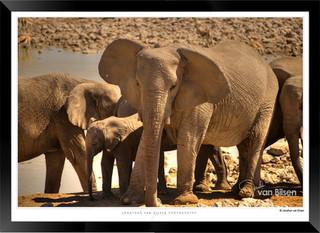 Elephants_of_Etosha_-_011_-_©_Jonathan_v