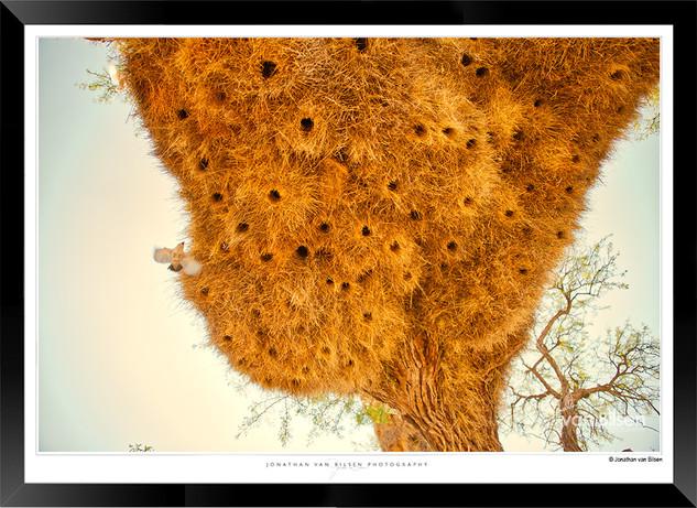 Birds_of_Namibia_-_007_-_©_Jonathan_van