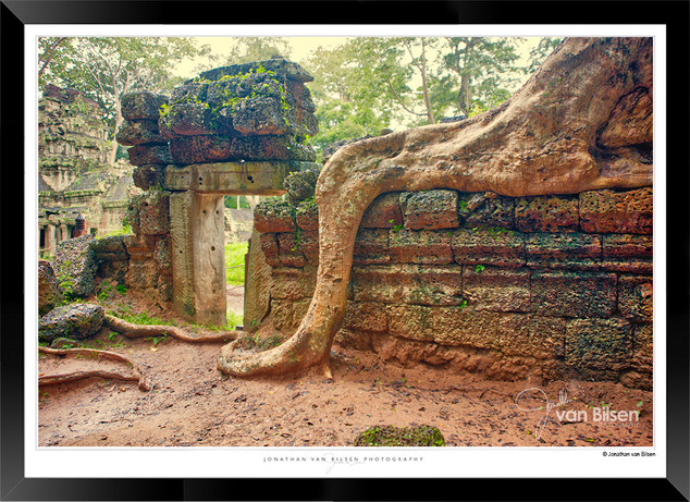 Trees of Angkor Thom - 002 - Jonathan va