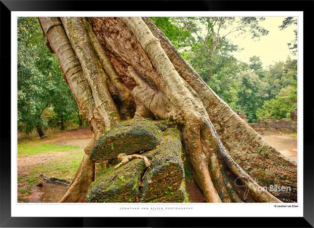 Trees of Angkor Thom - 005 - Jonathan va