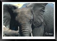 Elephants_of_the_Serengeti_-_005_-_©_Jo