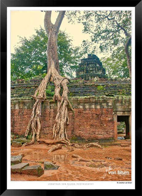 Trees of Angkor Thom - 013 - Jonathan va