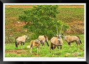 Images of East Africa - 016 - © Jonathan van Bilsen.jpg