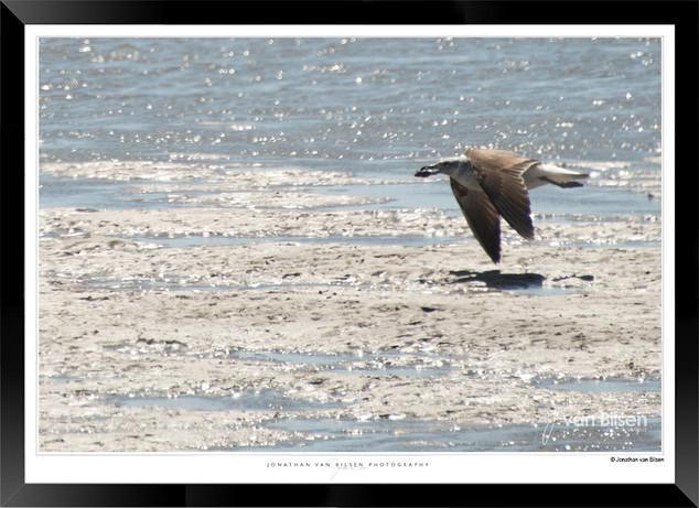 Birds_of_Namibia_-_029_-_©_Jonathan_van