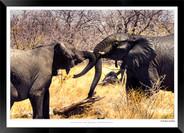 Elephants_of_Etosha_-_018_-_©_Jonathan_v