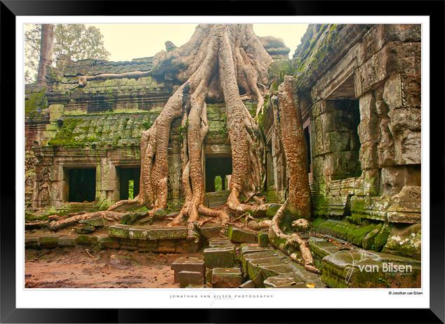 Trees of Angkor Thom - 026 - Jonathan va