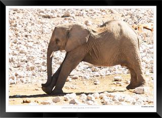 Elephants_of_Etosha_-_016_-_©_Jonathan_v