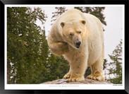 Beasts_of_Canada_-_001_-_©_Jonathan_van