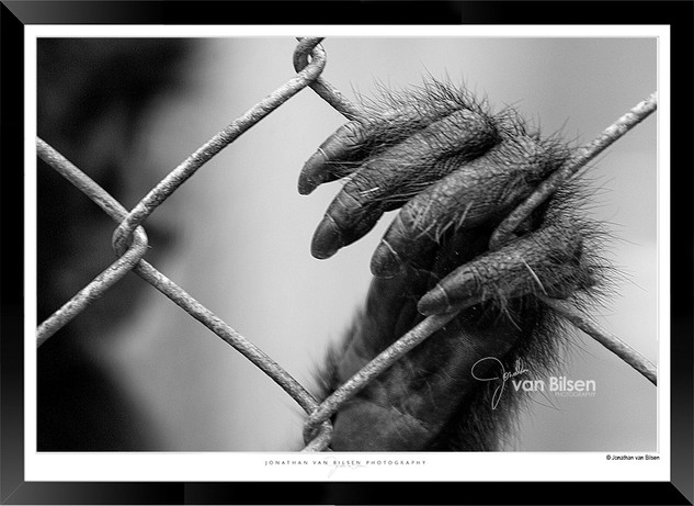 IOPA-009 - Jonathan van Bilsen Photograp