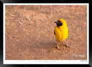 Birds_of_Namibia_-_011_-_©_Jonathan_van