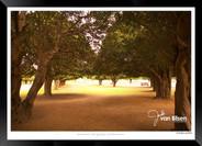 Images_of_Hampton_Court_-_007_-_©Jonath
