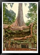 Trees of Angkor Thom - 022 - Jonathan va