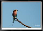 Birds_of_Namibia_-_001_-_©_Jonathan_van