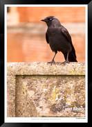 Images_of_Hampton_Court_-_005_-_©Jonath