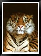 Beasts_of_Asia_-__001_-_©Jonathan_van_B