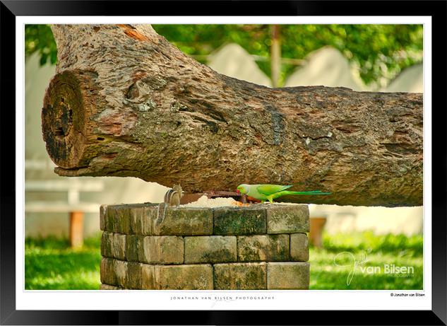Images of Aanuradhapura - 009 - Jonathan