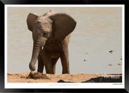 Elephants_of_Etosha_-_010_-_©_Jonathan_v