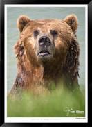 Images of Alaska - IOAL-012.jpg