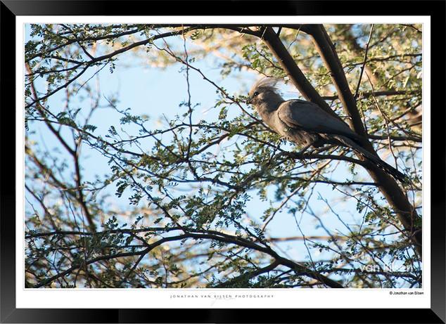 Birds_of_Namibia_-_023_-_©_Jonathan_van