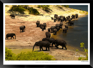 Elephants_of_the_Serengeti_-_004_-_©_Jo