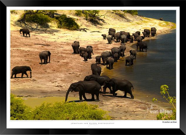 Elephants_of_the_Serengeti_-_004_-_©_Jo