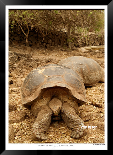 Images of the Galapagos Islands - 002 -