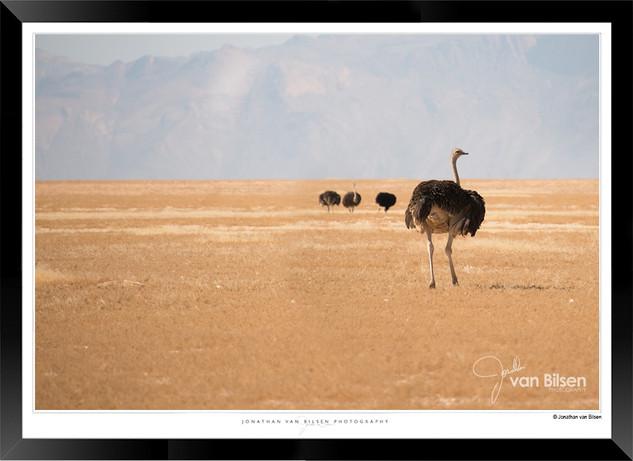 Birds_of_Namibia_-_018_-_©_Jonathan_van