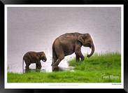 Elephants of Sri Lanka -  010 - ©Jonathan van Bilsen.jpg