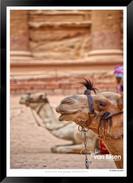 Images_of_Petra_-_007-_©_Jonathan_van_B