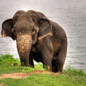 Sharing a Room in Sri Lanka