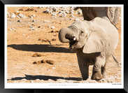 Elephants_of_Etosha_-_004_-_©_Jonathan_v