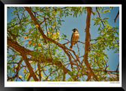 Birds_of_Namibia_-_008_-_©_Jonathan_van