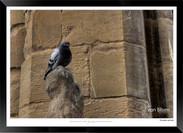 Images_of_Tuscany_-__005_-_©Jonathan_va