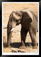 Elephants_of_Etosha_-_015_-_©_Jonathan_v