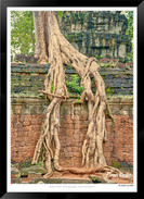 Trees of Angkor Thom - 008 - Jonathan va