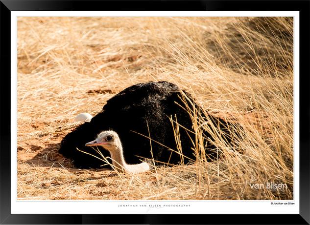 Birds_of_Namibia_-_003_-_©_Jonathan_van
