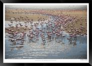 Birds_of_Namibia_-_012_-_©_Jonathan_van