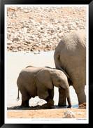 Elephants_of_Etosha_-_007_-_©_Jonathan_v