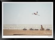 Birds_of_Namibia_-_030_-_©_Jonathan_van