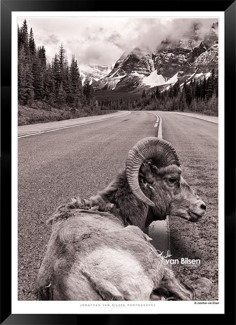 On the Road Again - IORM-004 - Jonathan