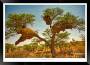 Birds_of_Namibia_-_004_-_©_Jonathan_van