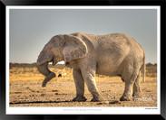 Elephants_of_Etosha_-_001_-_©_Jonathan_v
