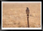 Birds_of_Namibia_-_022_-_©_Jonathan_van